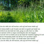 Postkarte-Viola-Livera-Martin-Liebermann-02