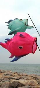 Fliegende-Fische-0101